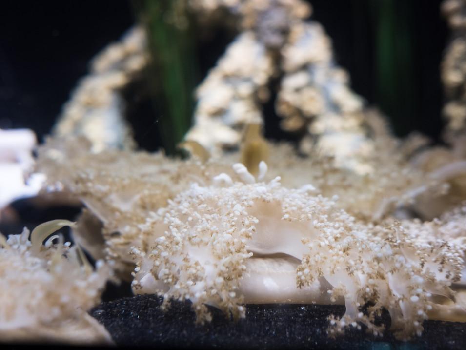 Mystic Aquarium Picture