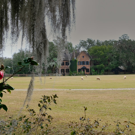 Middleton Place 1