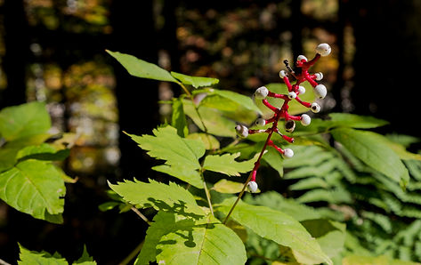 White Mountains Flora