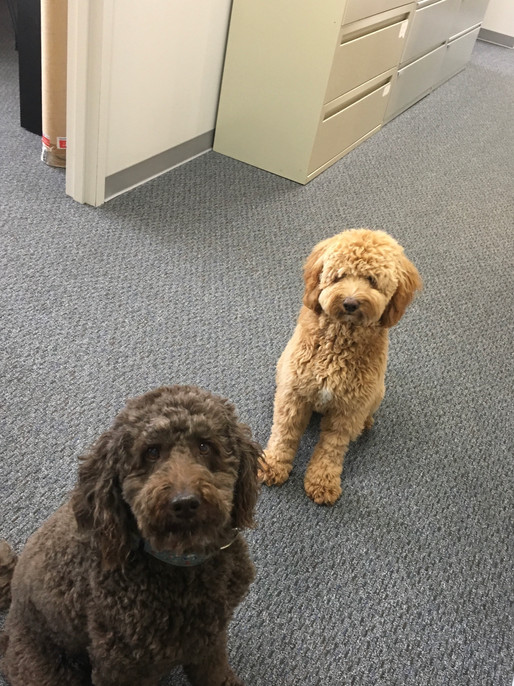 Rudder and Rider wish everyone a Happy Take Your Dog to Work Day!