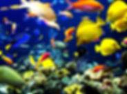 ocean-life-1.jpg