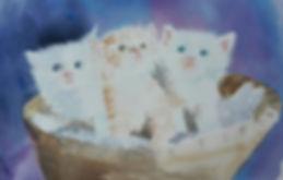 Kitty Litter!