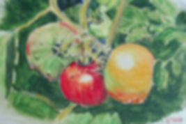 Tomatoes watercolor pencil