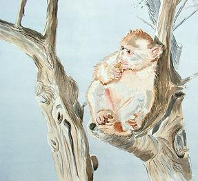 Gibralta Monkey