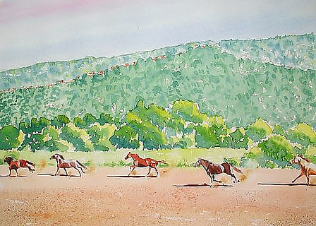 Algarve Horses