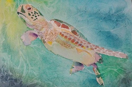 Turtle Jan.jpg