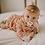 Thumbnail: Muslin Swaddle | Daisy