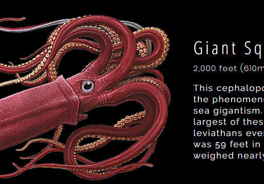 Marine Biology Playground: A Resource For Deep Sea Creatures