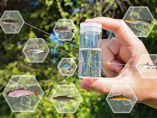eDNA - The Non-Invasive Option for Marine Species Research