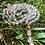 Thumbnail: Japamala Quartzo Transparente com Pedra do sol