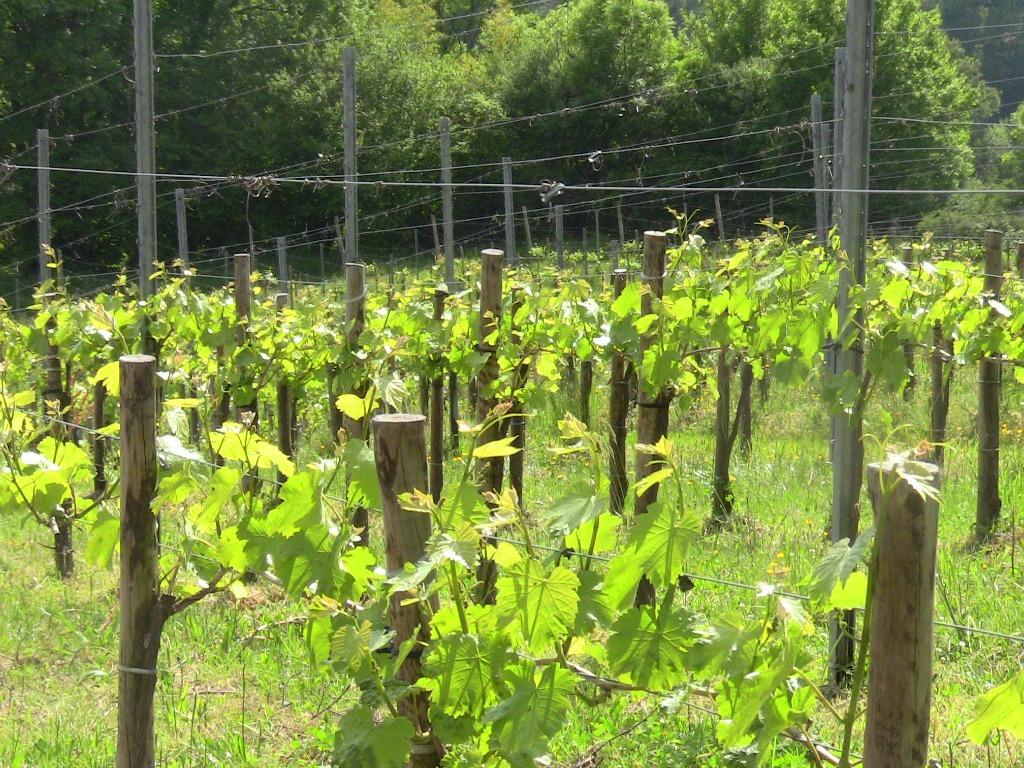 les vignes en Bio autour de marimpoey