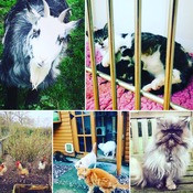 Children's Mindfulness at Shropshire Cat Rescue