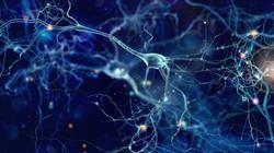 20191206033801_1200_675_-_neuronios