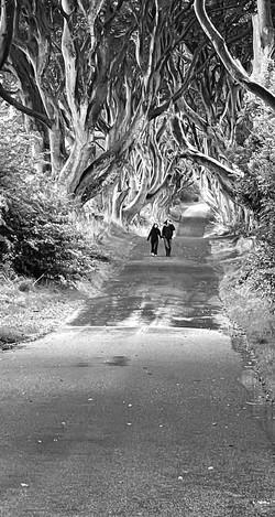 a walk along the lane