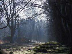 rays through trees