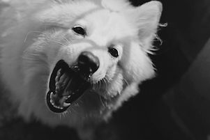 largedog.jpg