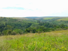 Près de 65.OOO hectares des forêts des communautés locales en voie de sécurisation dans le Kwango