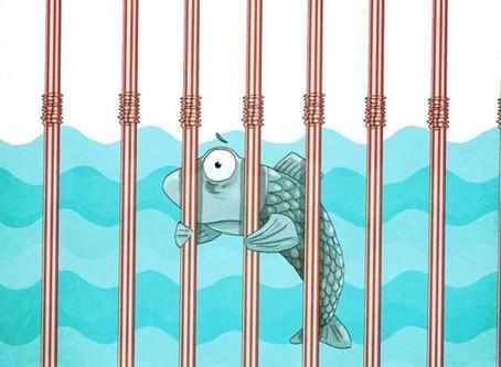 Jail Time for Plastic Straws?