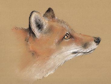 Fox Pastel drawing - Jo Gardiner Art
