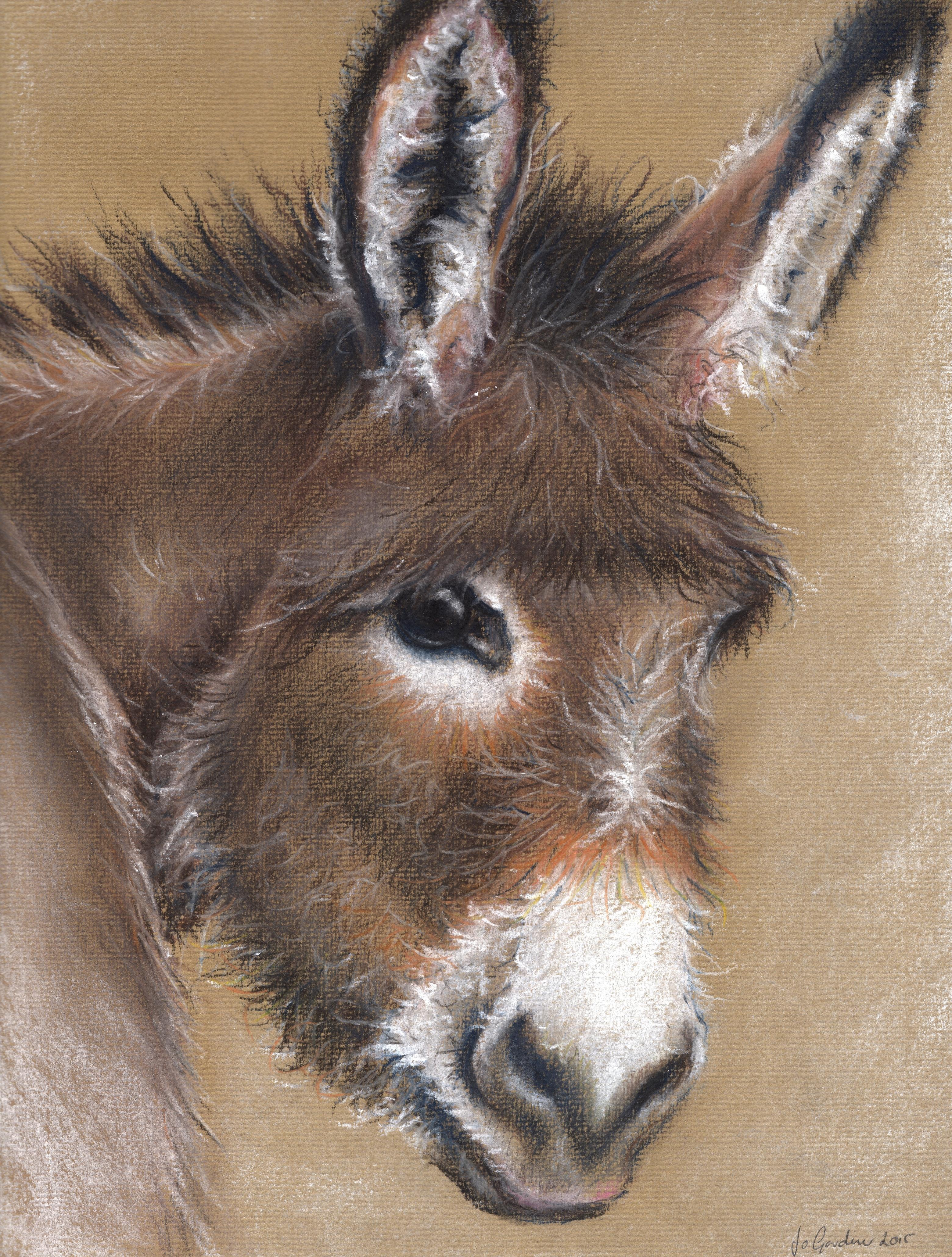 Donkey - pastel