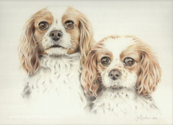 Ruby & Charlie 2016 coloured pencil_Fotor