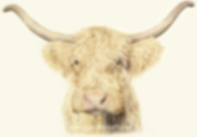 Highland Cow Drawing - Jo Gardiner Art