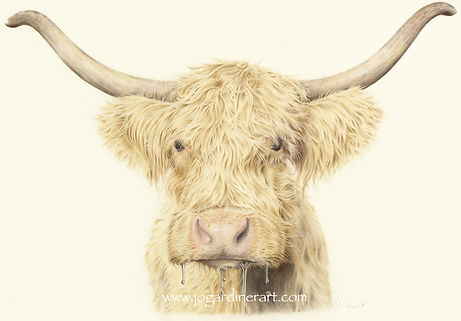 Highland Cow Drawing - Jo Gardiner Art
