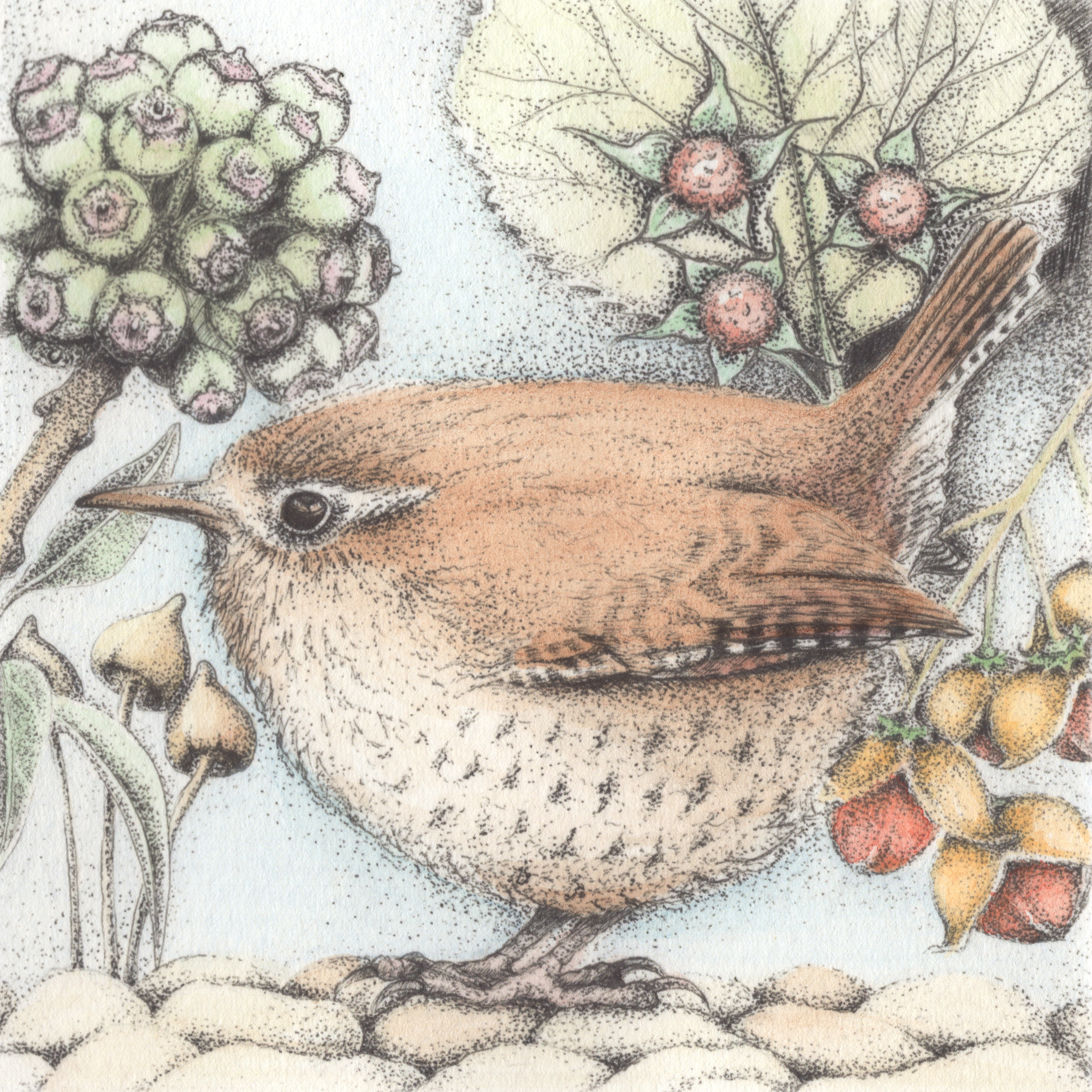 wren colour scan
