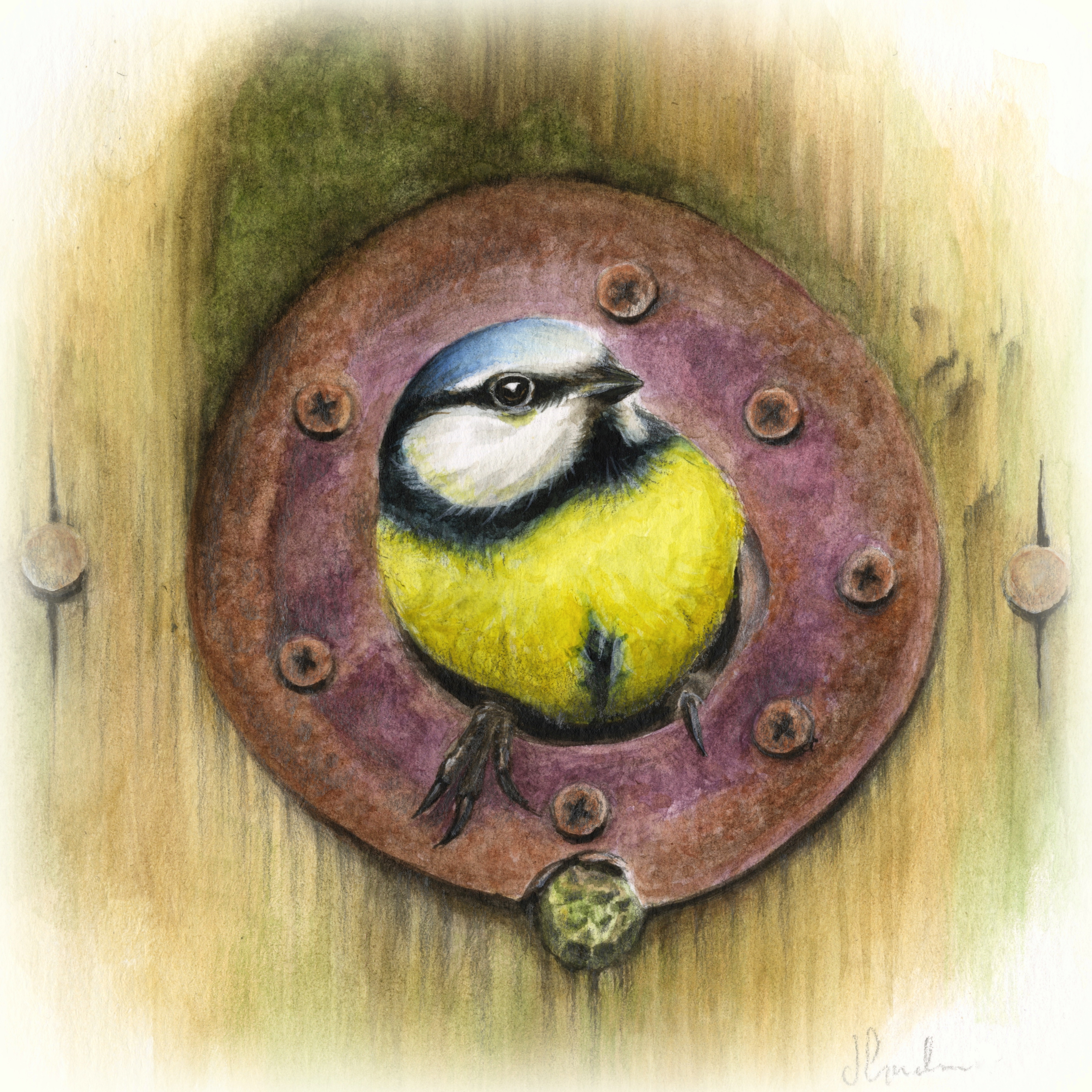 'hello' water colour blue tit - Jo Gardiner Art
