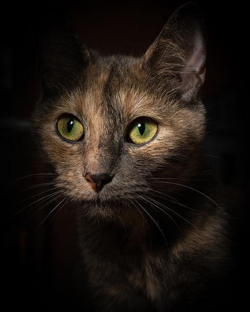 2020 09 10 Cats-16.jpg