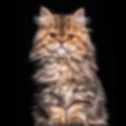 Nala Portrait.jpg