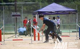 犬のしつけ Dog Psychology Kei 兵庫県 出張ドッグトレーナー