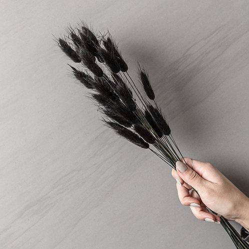 "dried lagurus ""black"""