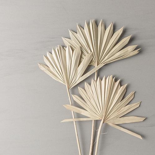 mini palm spear