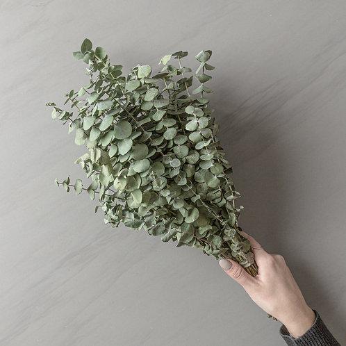 dried eucalyptus bunch