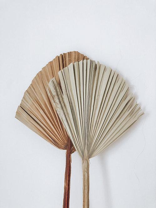 giant dried palm leaf