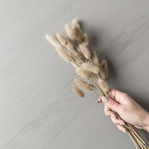 """dried lagurus """"natural"""""""
