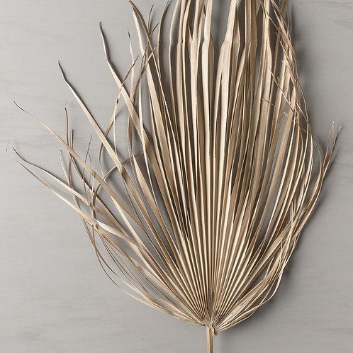 dried palm leaf medium
