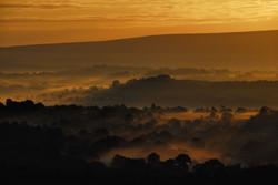 177/365 Golden morning mist