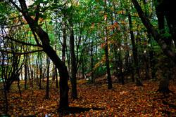 195/365 Autumn woodland