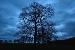 251/365 Winter tree