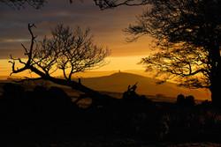 315/365 A Golden dawn