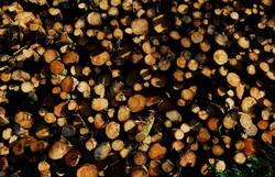 033/365 Logs