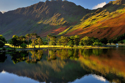 The Buttermere Pines