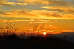 157/365 Grassy sunset