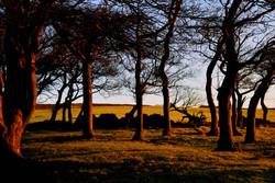 316/365 Golden trees