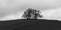 311/365 Winter trees