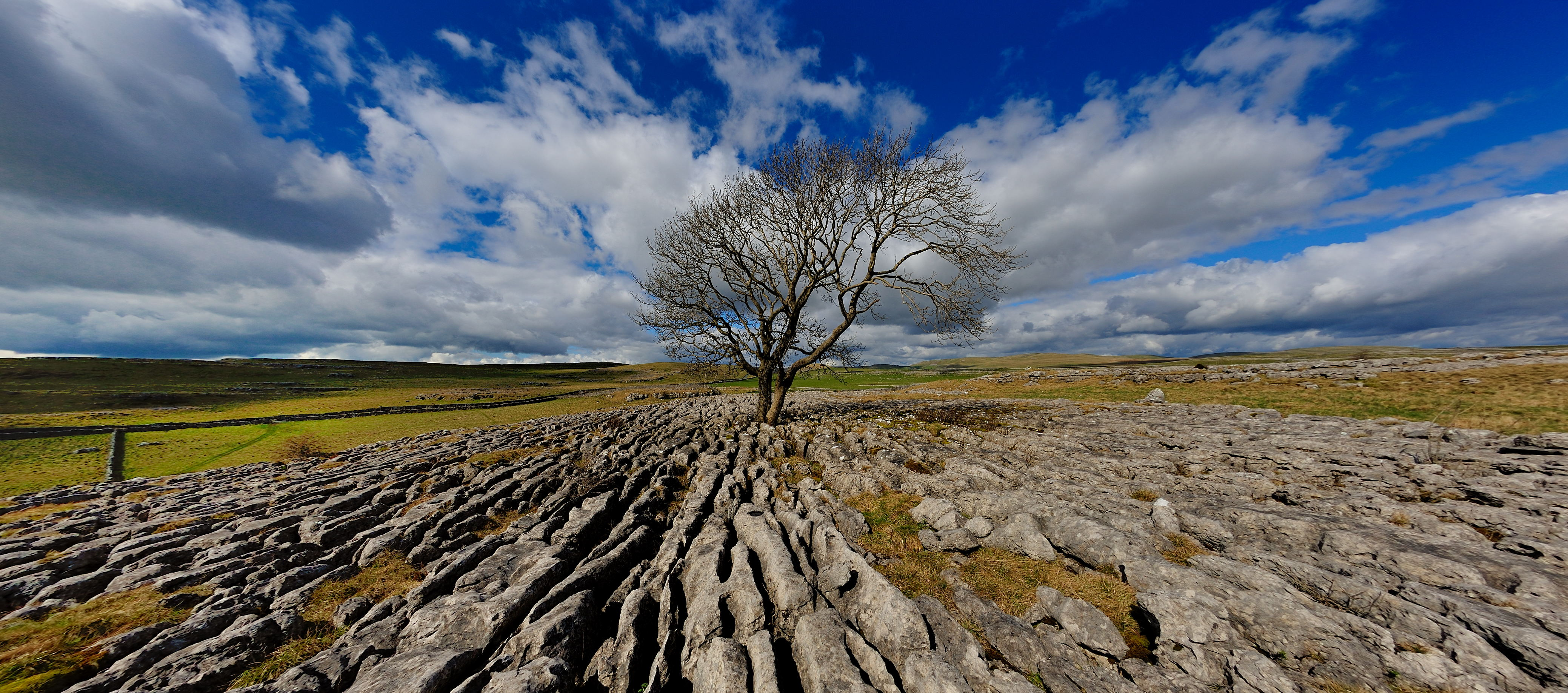 The Malham tree