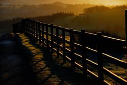 314/365 Through the fence