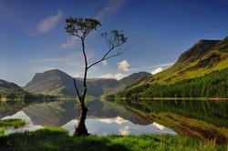 The lone birch